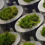 Biological fuel cells made from moss