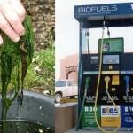 algae-biofuel-NASA-plastic-bags