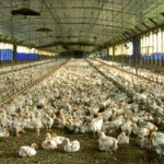 Power and waste management system for the poultry industry