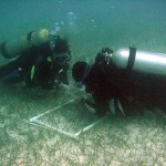 Seagrasses can store as much carbon as forests