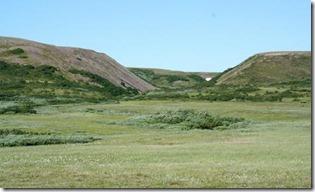Arctic_tundra_trees